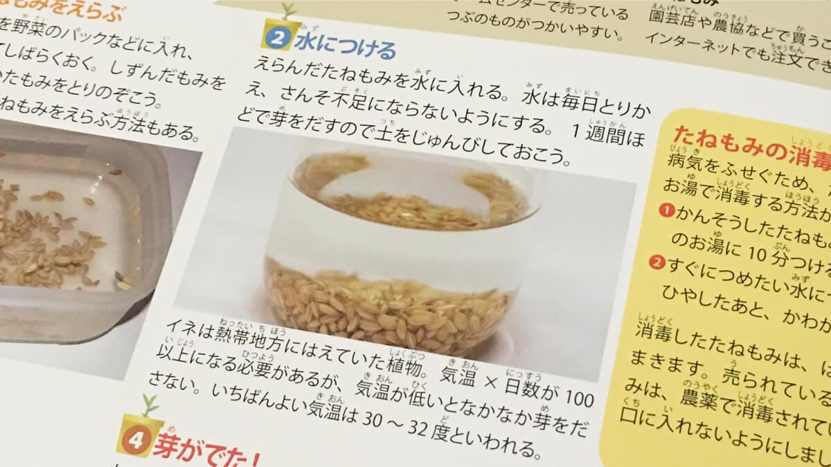 玄米の発芽に最適な温度