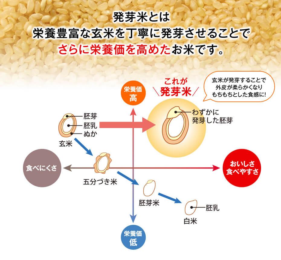 発芽米(発芽玄米)、胚芽米、玄米、五分づき米、白米