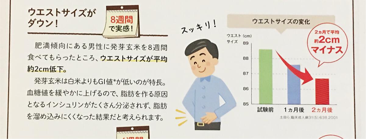 発芽玄米 8週間で、ウエストサイズが減少