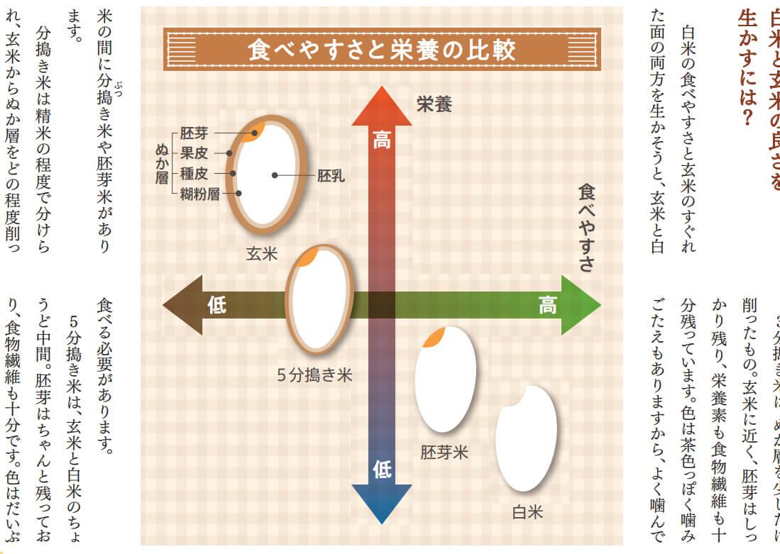 玄米、分づき米、胚芽米、白米の栄養価と食べやすさ