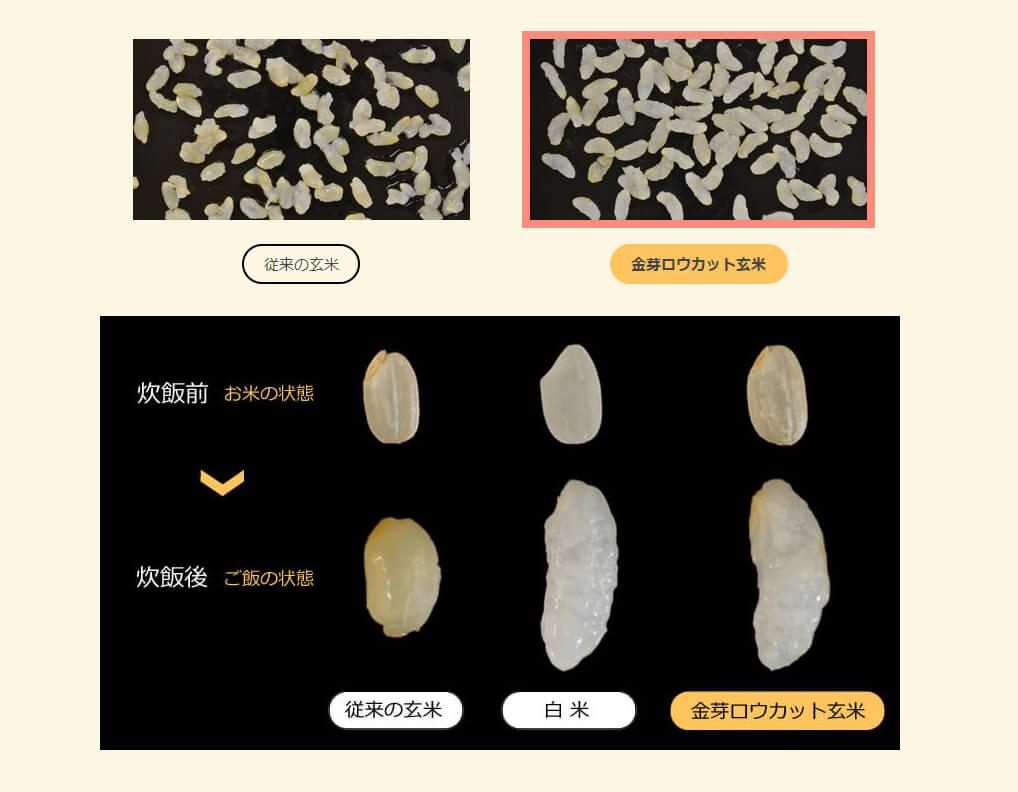 玄米、白米、ロウカット玄米の炊き上がりの比較