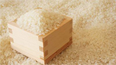 胚芽米のイメージ